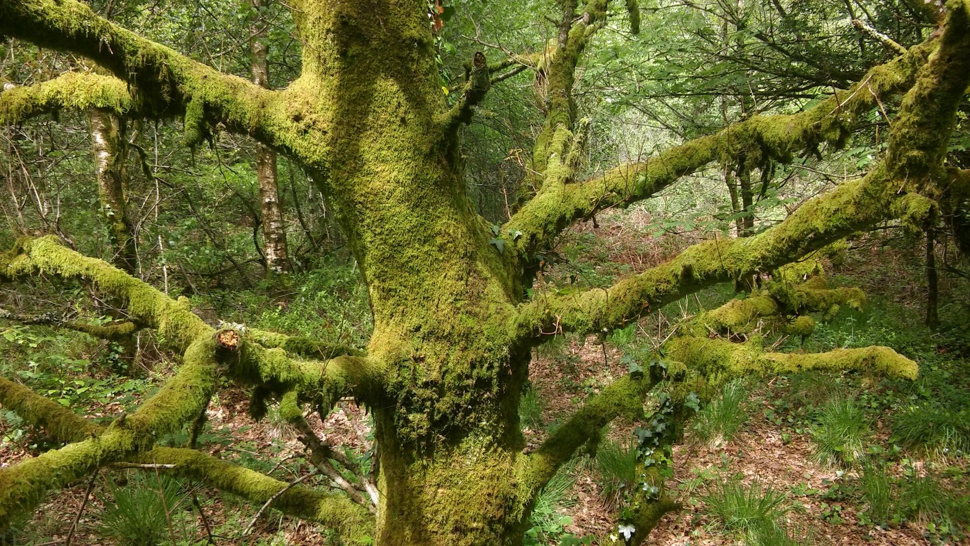honiton woods